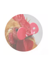 Очки для птицы весом 0,5-2,5кг-(курица, фазан)